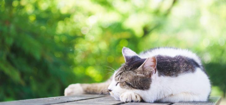 お釈迦さまも「休むときは休め」と仰っています。